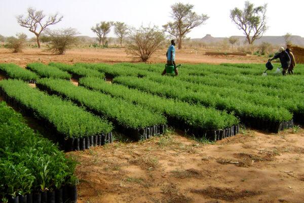 Tree-Nation-Wallpaper - Tree Nursery in Niger